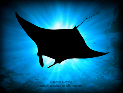The Manta Ray GreenList has a new home