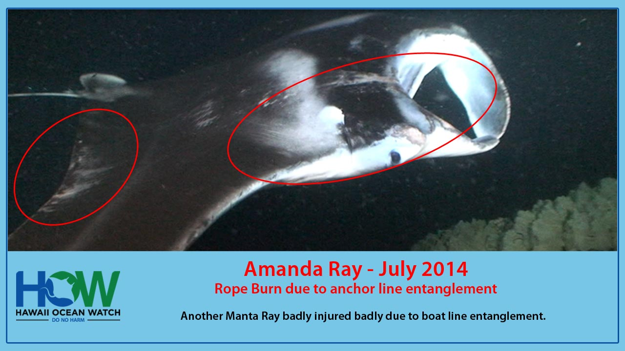 how-injuries-mantas-slideshow-slide5